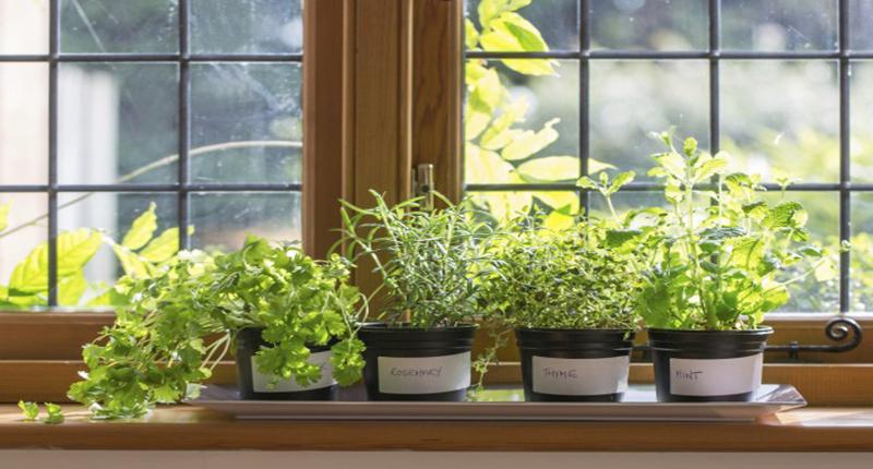 Piante aromatiche non solo da mangiare buone notizie for Solo piante